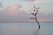 Malapascua Island Photos - Tree In Water by Flash Parker