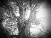 Jeremy Wells Metal Prints - Tree Metal Print by Jeremy Wells