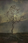Lonesome Prints - Tree Print by Joana Kruse