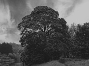 John Adams Photo Prints - Tree Print by John Adams