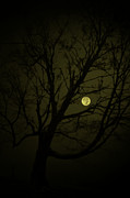 Night Scenes Posters - Tree Lean Moon Poster by Emily Stauring