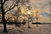Winter Trees Photo Originals - Tree Light by Terence Davis