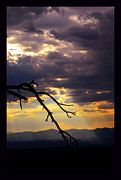 Santa Fe National Forest Photos - Tree Limb in Sunset by Susanne Still