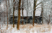 Snow Tree Prints Prints - Tree Locked Barn Print by C Wayne Hennebert