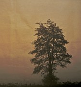 Haze Photo Prints - Tree Print by Odd Jeppesen