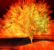 Orange Digital Art Originals - Tree of Flames by Jessica Grandall