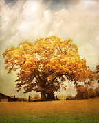 Autumn Landscape Art - Tree of Joy by Jai Johnson
