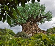 Wdw Prints - Tree of Life Print by Carol  Bradley - Double B Photography