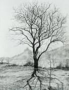 Bare Trees Drawings Metal Prints - Tree of Life Metal Print by Mary Singer