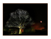 Moonlit Night Framed Prints - Tree of Light Framed Print by Mal Bray