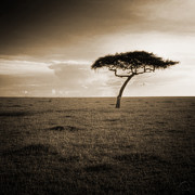 Janne Olkkonen - Tree of the Traveling...