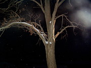 Snowy Night Posters - Tree On A Dark Snowy Night Poster by Victoria Sheldon