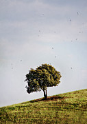 Flock Of Bird Art - Tree On Hill by Antonio Arcos Aka Fotonstudio Photography