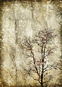 Snow Abstract Posters - Tree On Old Grunge Paper Poster by Setsiri Silapasuwanchai