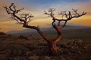 Yorkshire Photos - Tree On Top Of Hill Of  Yorkshire Dales by Ray Bradshaw