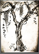 Vines Drawings - Tree Outside My  by Christy Usilton