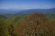 Blue Ridge Mountains Posters - Tree over the Blue Ridge Parkway Poster by Andrew Soundarajan