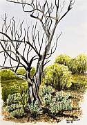 Bare Trees Drawings Prints - Tree Painting Print by Svetlana Sewell