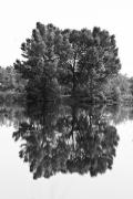 James Insogna Framed Prints - Tree Reflection in Black and White Framed Print by James Bo Insogna