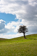 Lonely Tree Prints - Tree Print by Semmick Photo