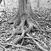 Tree Roots And Leaves Print by Holden Richards