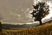 Gore Range Photos - Tree by Scott Askins