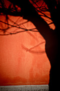 Silvia Ganora - Tree shadow