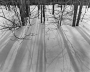 Bare Trees Prints - Tree Shadows in Snow Print by John Gilroy