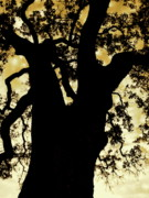 Nature Acrylic Prints - Tree Silhouette by Kimberly Gonzales