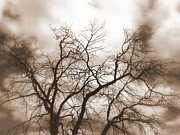 Evening Scenes Prints - Tree Silhouette Sepia Print by Cindy Wright