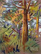 Autumn Drawings Originals - Tree Sketch by Donald Maier