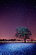 Winter Night Art - Tree Snow And Stars by Paul McGee