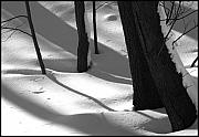 Winter Trees Photo Originals - Tree Snow Shadows by Rhea Malinofsky