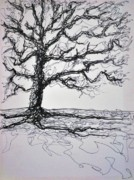Tree Lines Drawings Prints - Tree Print by Steven Barrett