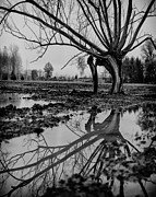 Puddle Prints - Tree Study #4 Print by Philip Sweeck