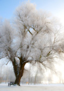 Freezing Digital Art Prints - Tree Print by Svetlana Sewell