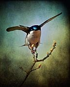 Precarious Framed Prints - Tree Swallow 2 Framed Print by Al  Mueller