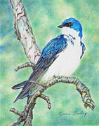 Tree Art Print Drawings Framed Prints - Tree Swallow Framed Print by Karen Curley