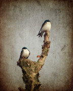 Marsh Prints - Tree Swallows Print by Al  Mueller