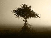 Stuart Turnbull Metal Prints - Tree  through the mist Metal Print by Stuart Turnbull