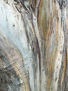 Tree Trunk Artistry Print by Jan Moore