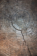 Weathered Photo Posters - Tree Trunk Poster by Carlos Caetano