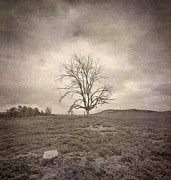 Tree Under The Rain Print by Guido Montanes Castillo