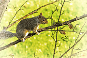 Critter Photos - Tree Visitor by Karol  Livote