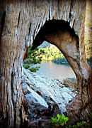 Framing Framed Prints - Tree with a view Framed Print by Donald Carmichael