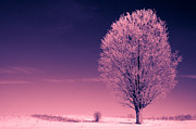 Colourized Photos - Tree with Hoar Frost by Gordon Wood