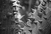 Points Originals - Tree With Spikes And Thorns by Rob Hans