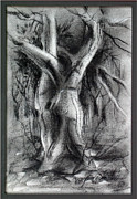 Tree Roots Drawings Framed Prints - Treecomp 1982 Framed Print by Glenn Bautista