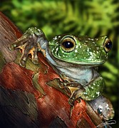 Anura Art - Treefrog  by Owen Bell
