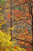 Autumn Scene Prints - Trees Abstract Print by Iris Greenwell